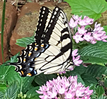 butterfly blog